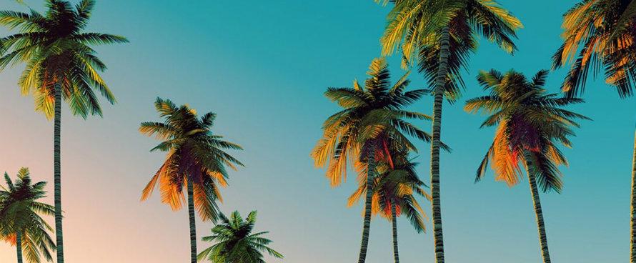sommer 2016 Atemberaubende tropische Trends für den Sommer 2016 erleben tumblrnzritramtednego 1460630551p8lc4